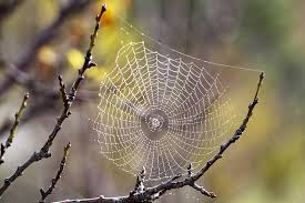 The Spider's Web 2
