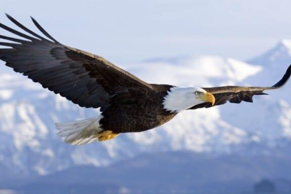 The Eagle 9