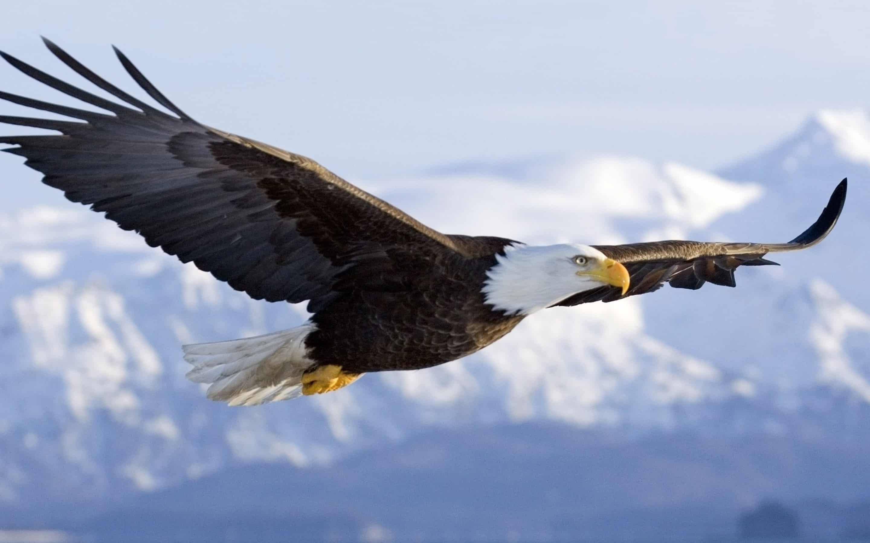 The Eagle 1