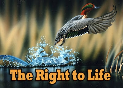 The Right to Life 1