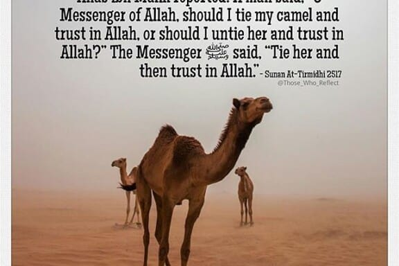 Tie it and put your trust in Allah 5