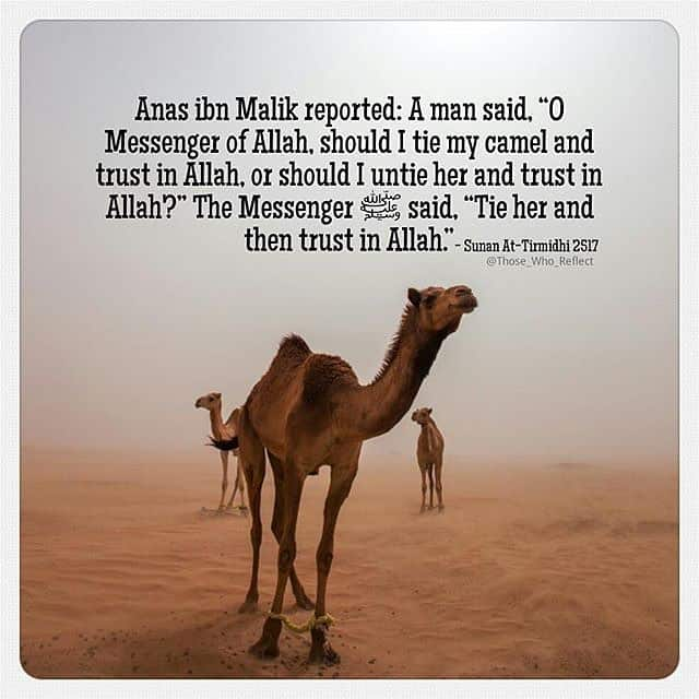 Tie it and put your trust in Allah 1