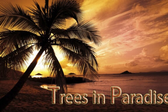 Trees in Paradise 3